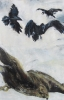 Birdfight, Ravens, Buzzard