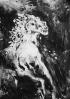 The white horse   -    Das weisse Pferd